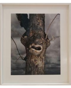 Michael Loos, You talking to me?, stampa fotografica ad inchiostro pigmentato su carta Hahnemühle, 56x70 (79x93 con cornice), 2010