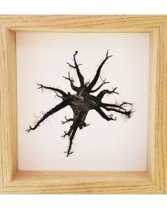 Michael Loos, Montale Oak (from under), stampa fotografica ad inchiostro pigmentato su carta Hahnemühle, 22x22 cm (26x26 cm con cornice), 2012