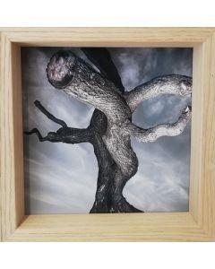 Michael Loos, Two to Tango, stampa fotografica ad inchiostro pigmentato su carta Hahnemühle, 22x22 cm (26x26 cm con cornice), 2012