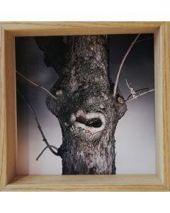 Michael Loos, You Talking To Me?, stampa fotografica ad inchiostro pigmentato su carta Hahnemühle, 22x22 cm (26x26 cm con cornice), 2012