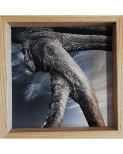 Michael Loos, Uncut, stampa fotografica ad inchiostro pigmentato su carta Hahnemühle, 22x22 cm (26x26 cm con cornice), 2012