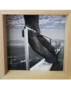 Michael Loos, Adapt n. 1, stampa fotografica ad inchiostro pigmentato su carta Hahnemühle, 22x22 cm (26x26 cm con cornice), 2014