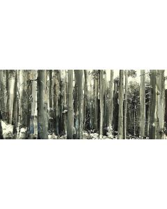 Tiziana Vanetti, Wild 1, acrilico su tela, 30x70 cm
