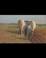 Giovanni Malesci, Buoi, olio su tela, 46x75 cm